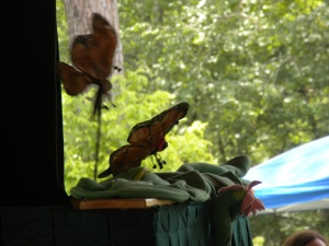 Photo of butterfly puppets during a show