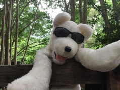 Dog puppet outdoors with sunglasses